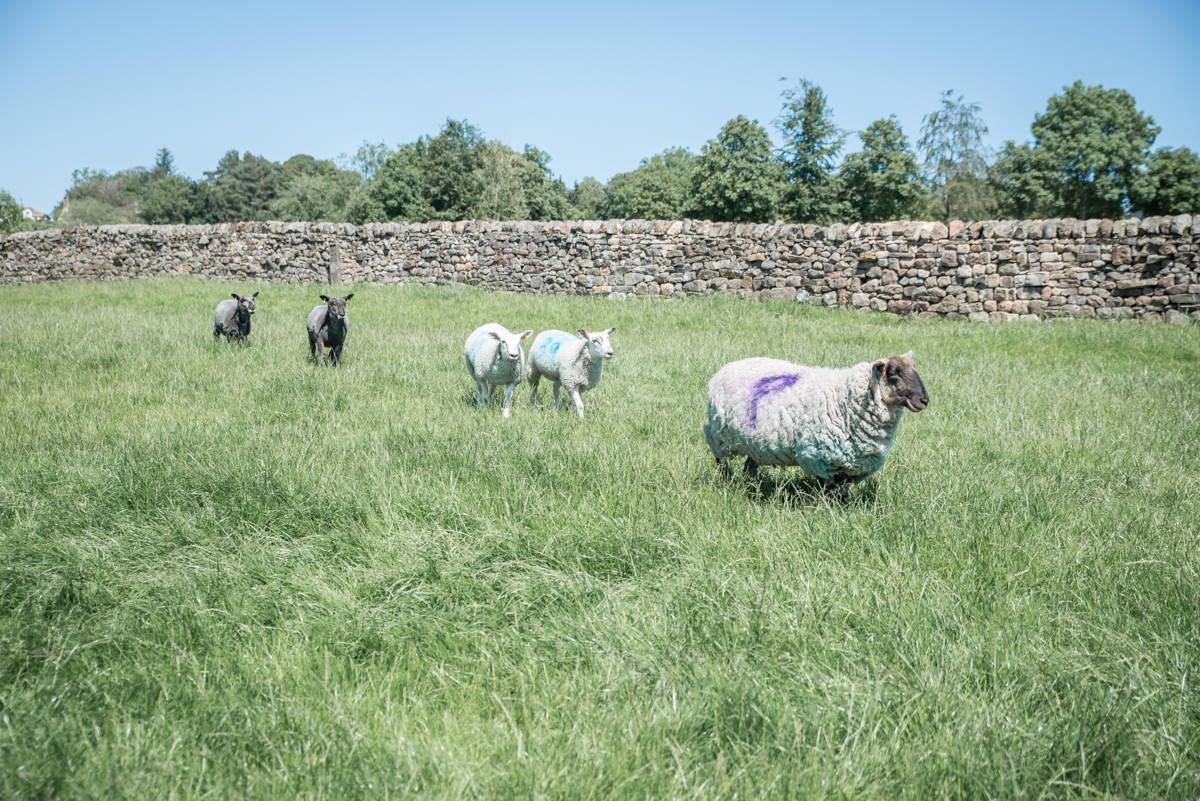yorkshire farming photography - leeds wedding photographer (3 of 221).jpg