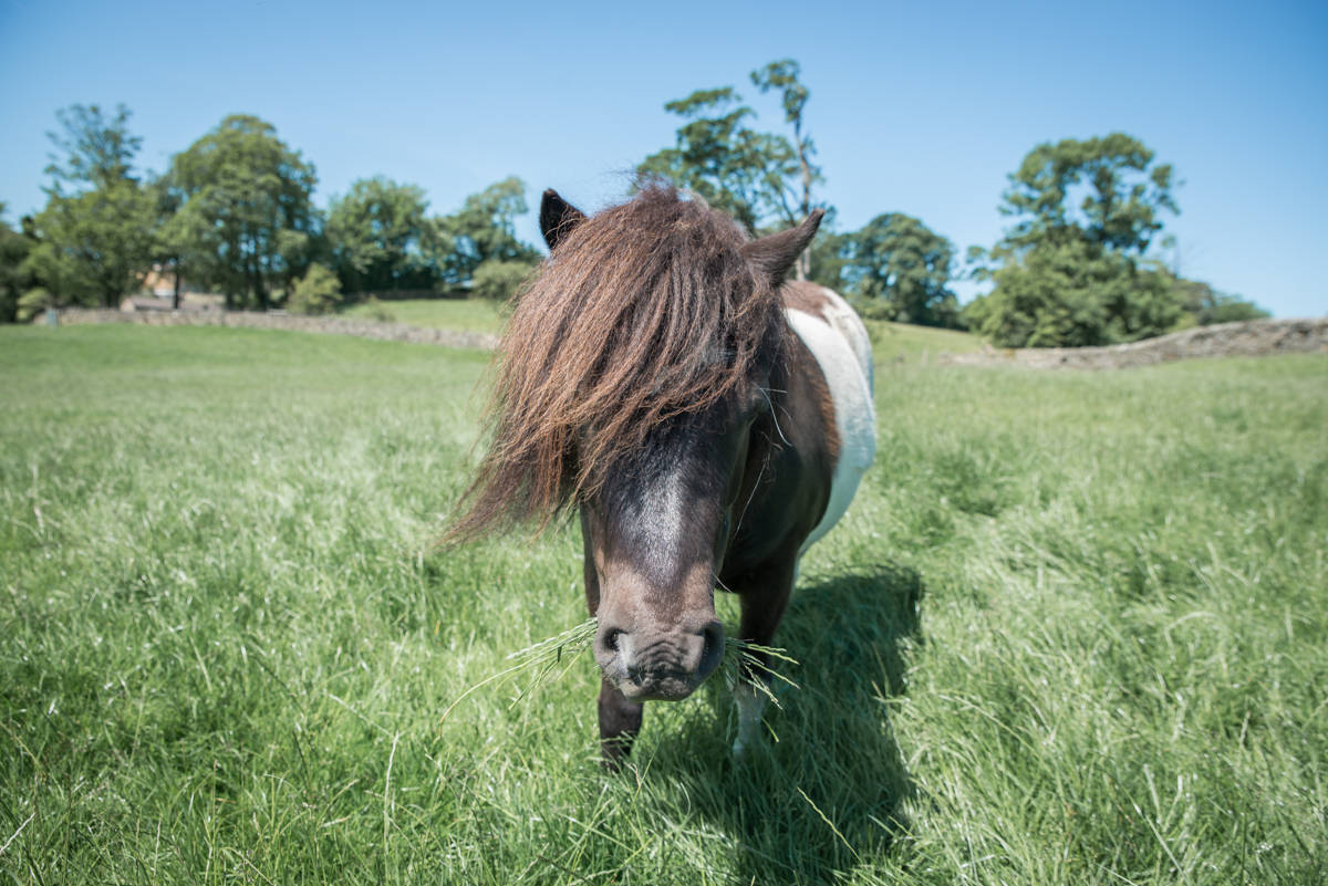 yorkshire farming photography - leeds wedding photographer (6 of 221).jpg