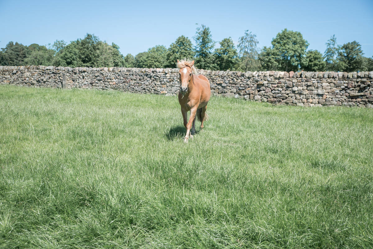 yorkshire farming photography - leeds wedding photographer (8 of 221).jpg
