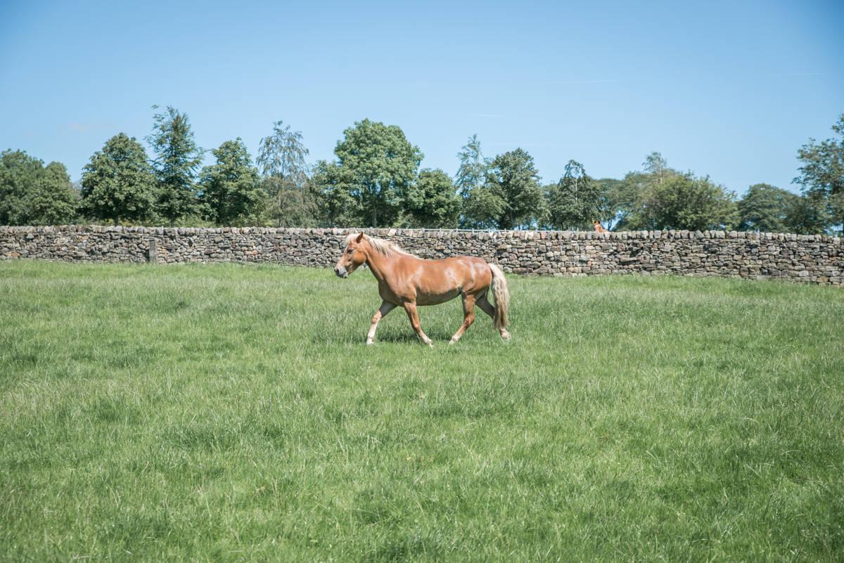 yorkshire farming photography - leeds wedding photographer (14 of 221).jpg