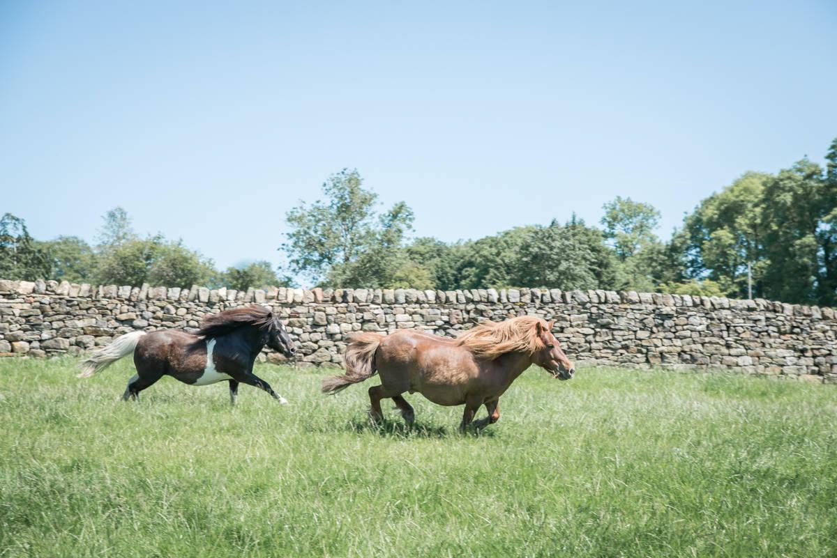 yorkshire farming photography - leeds wedding photographer (30 of 221).jpg