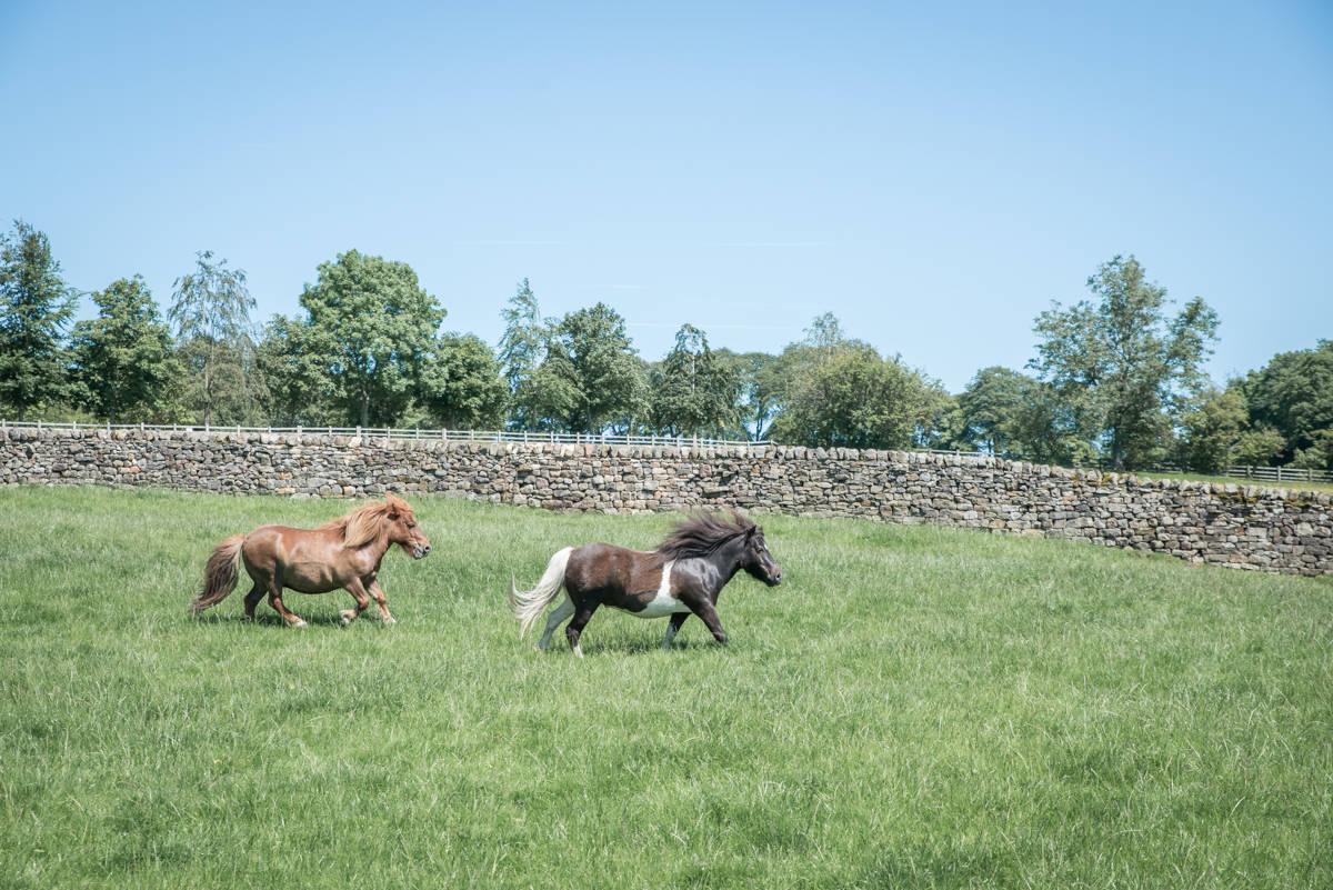 yorkshire farming photography - leeds wedding photographer (60 of 221).jpg