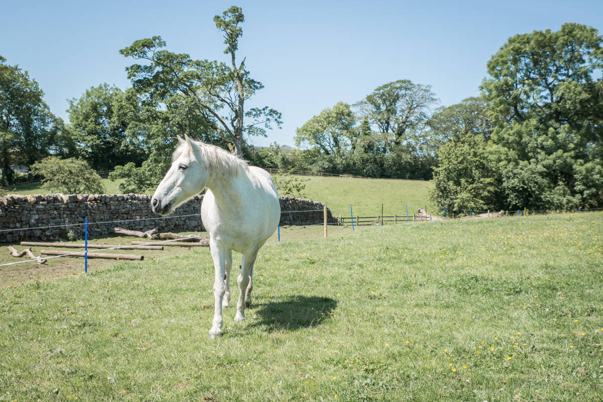 yorkshire farming photography - leeds wedding photographer (89 of 221).jpg