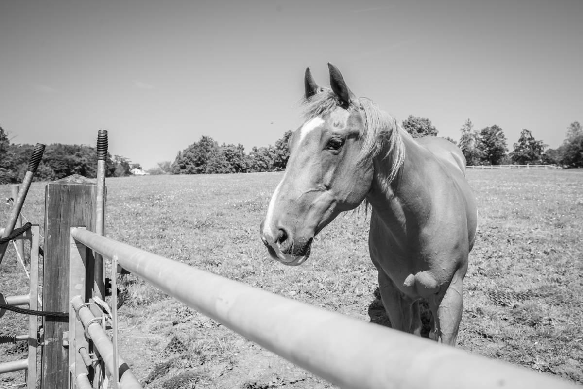 yorkshire farming photography - leeds wedding photographer (93 of 221).jpg
