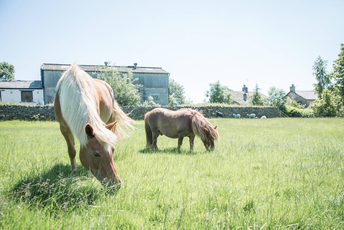 yorkshire farming photography - leeds wedding photographer (109 of 221).jpg