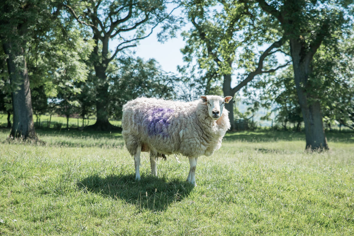 yorkshire farming photography - leeds wedding photographer (169 of 221).jpg