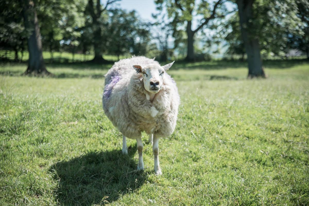 yorkshire farming photography - leeds wedding photographer (171 of 221).jpg