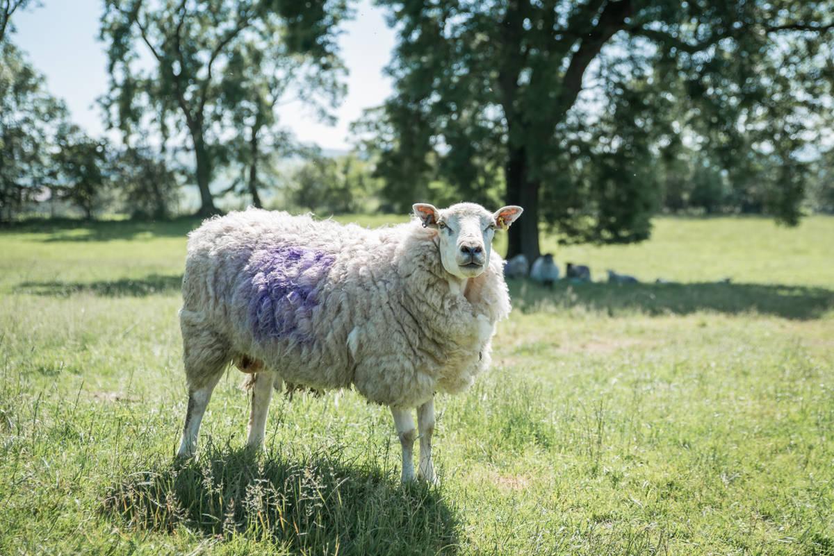 yorkshire farming photography - leeds wedding photographer (173 of 221).jpg