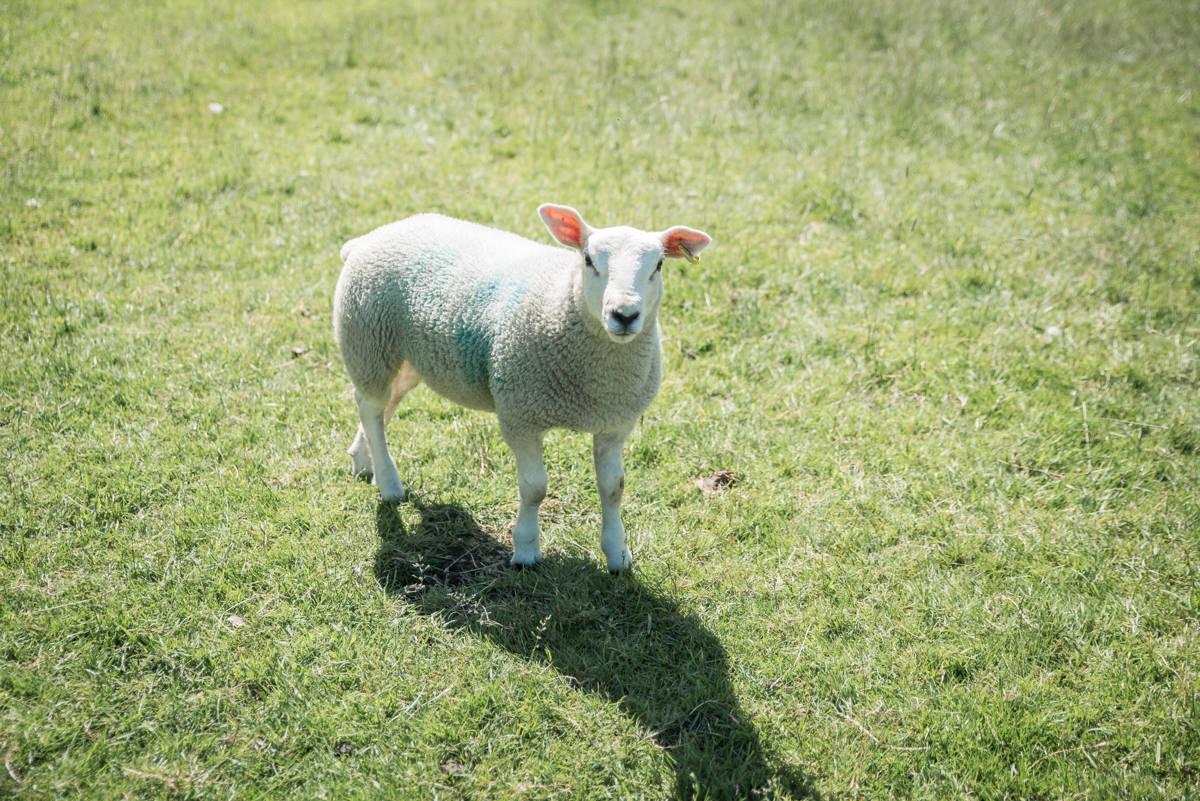 yorkshire farming photography - leeds wedding photographer (175 of 221).jpg