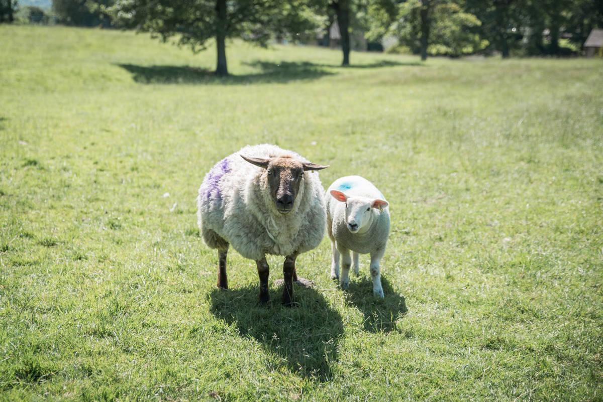 yorkshire farming photography - leeds wedding photographer (176 of 221).jpg