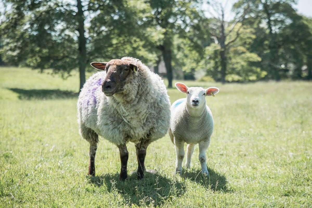 yorkshire farming photography - leeds wedding photographer (179 of 221).jpg