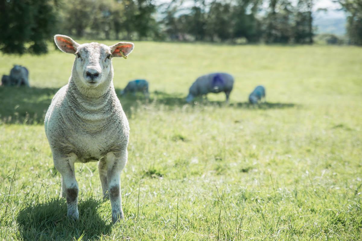 yorkshire farming photography - leeds wedding photographer (180 of 221).jpg