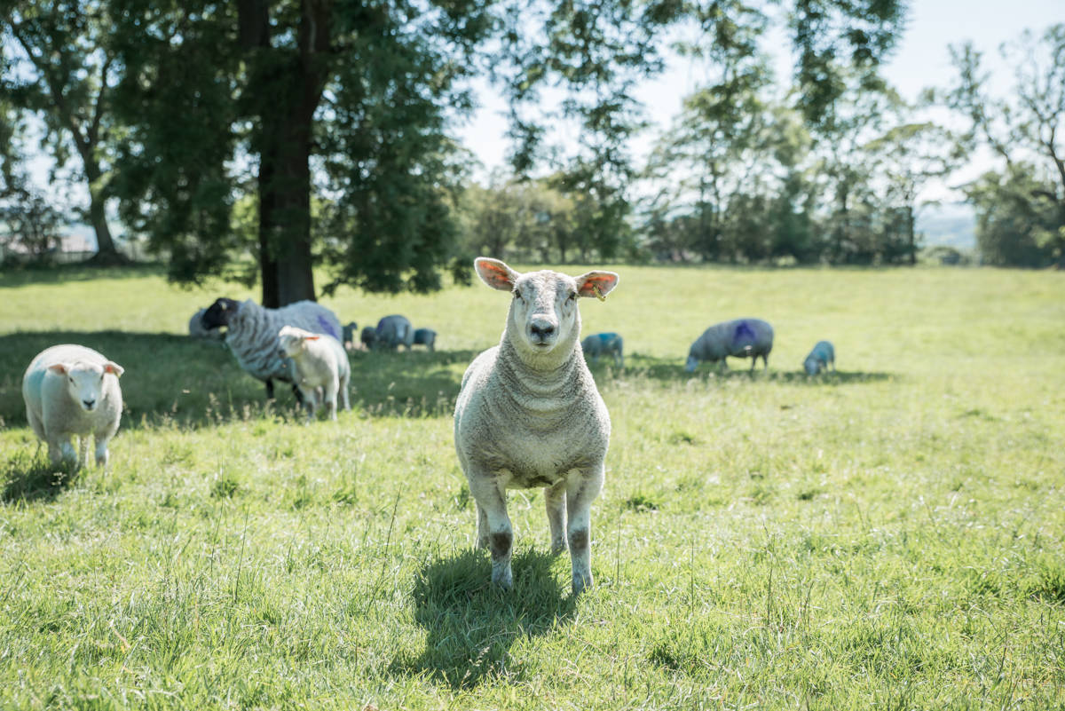 yorkshire farming photography - leeds wedding photographer (182 of 221).jpg