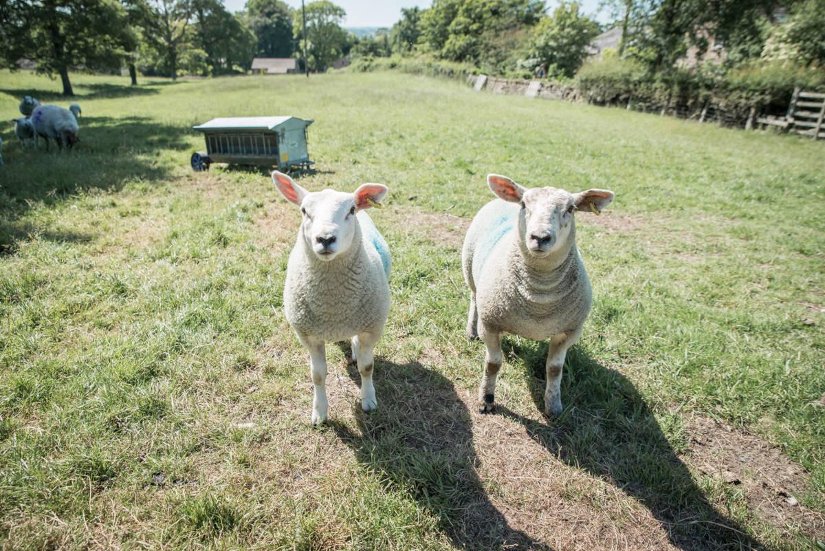 yorkshire farming photography - leeds wedding photographer (184 of 221).jpg