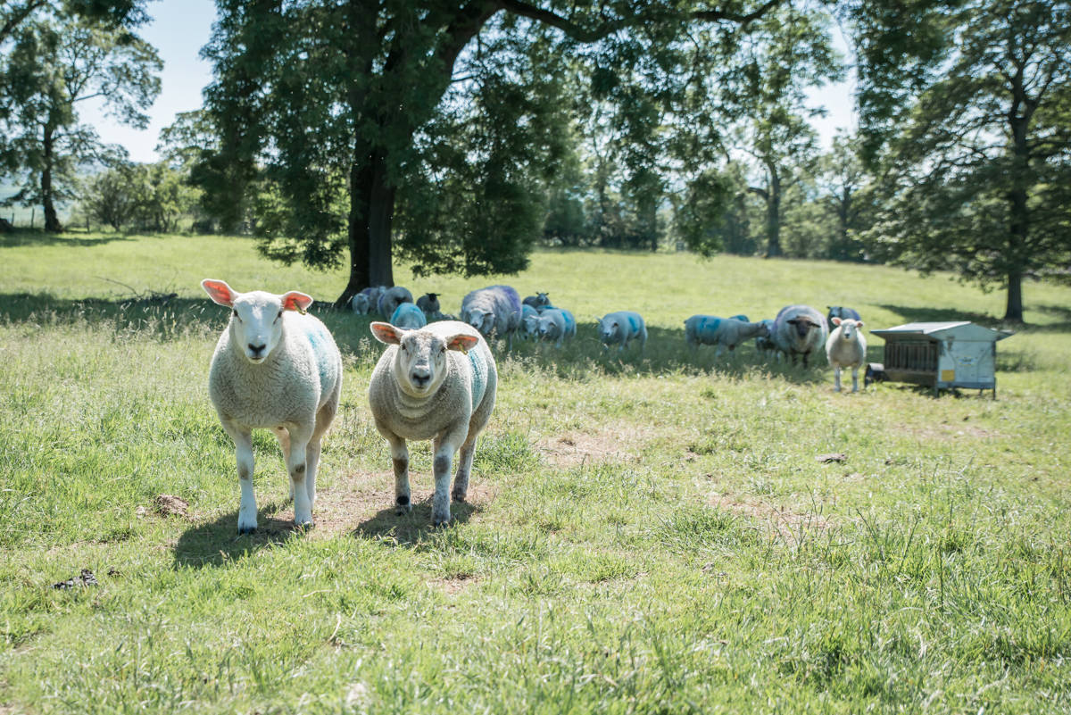 yorkshire farming photography - leeds wedding photographer (185 of 221).jpg