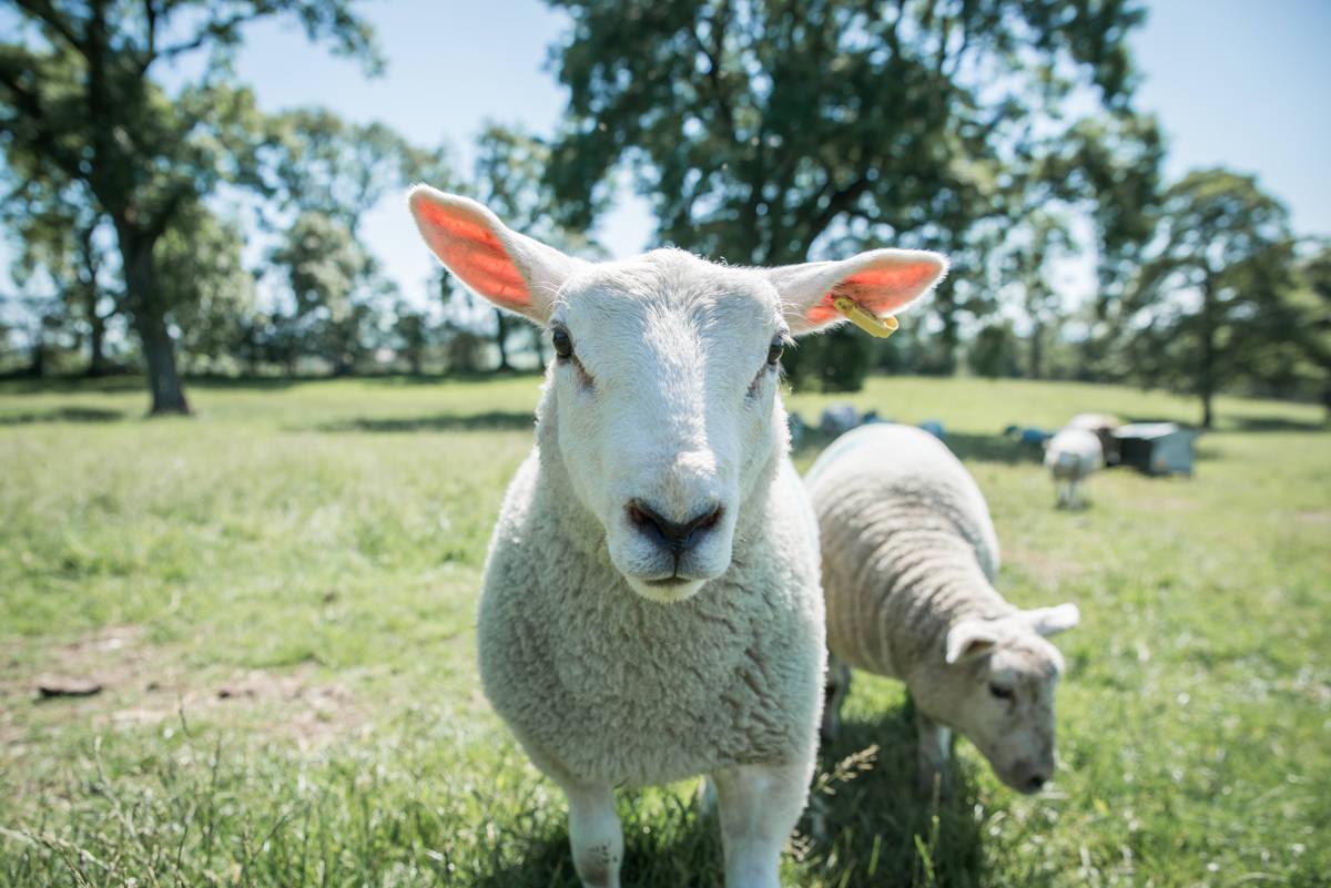 yorkshire farming photography - leeds wedding photographer (187 of 221).jpg