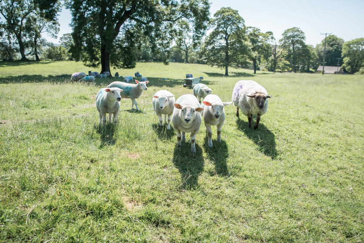 yorkshire farming photography - leeds wedding photographer (188 of 221).jpg
