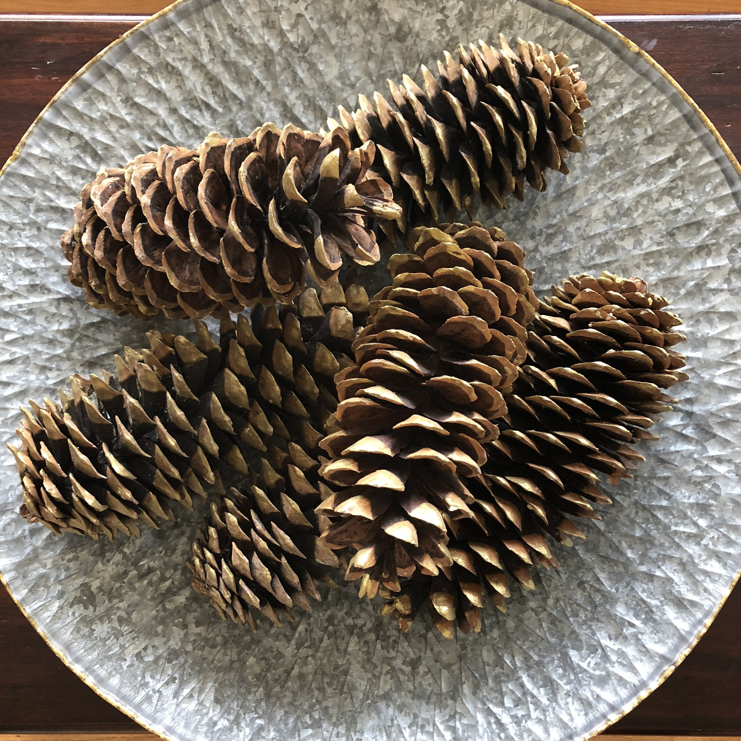 Oversized Pinecones by Calabash Card Co.