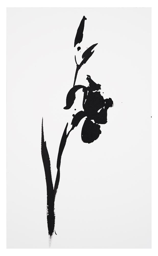 Botanical Study - Iris #18, 2016