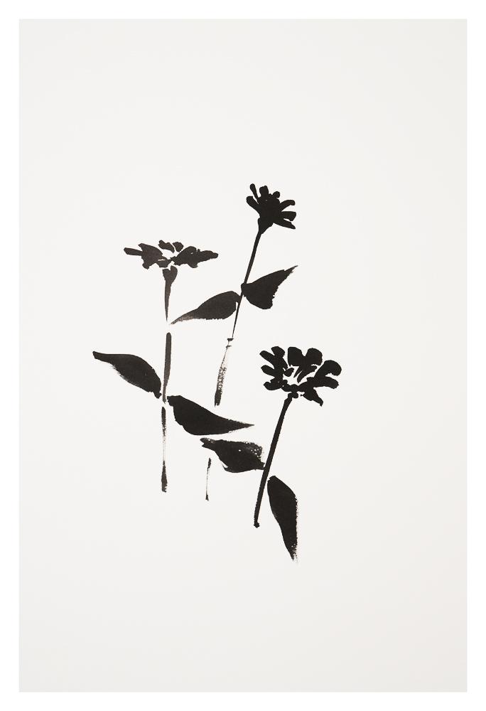 Botanical Study - Zinnia #1