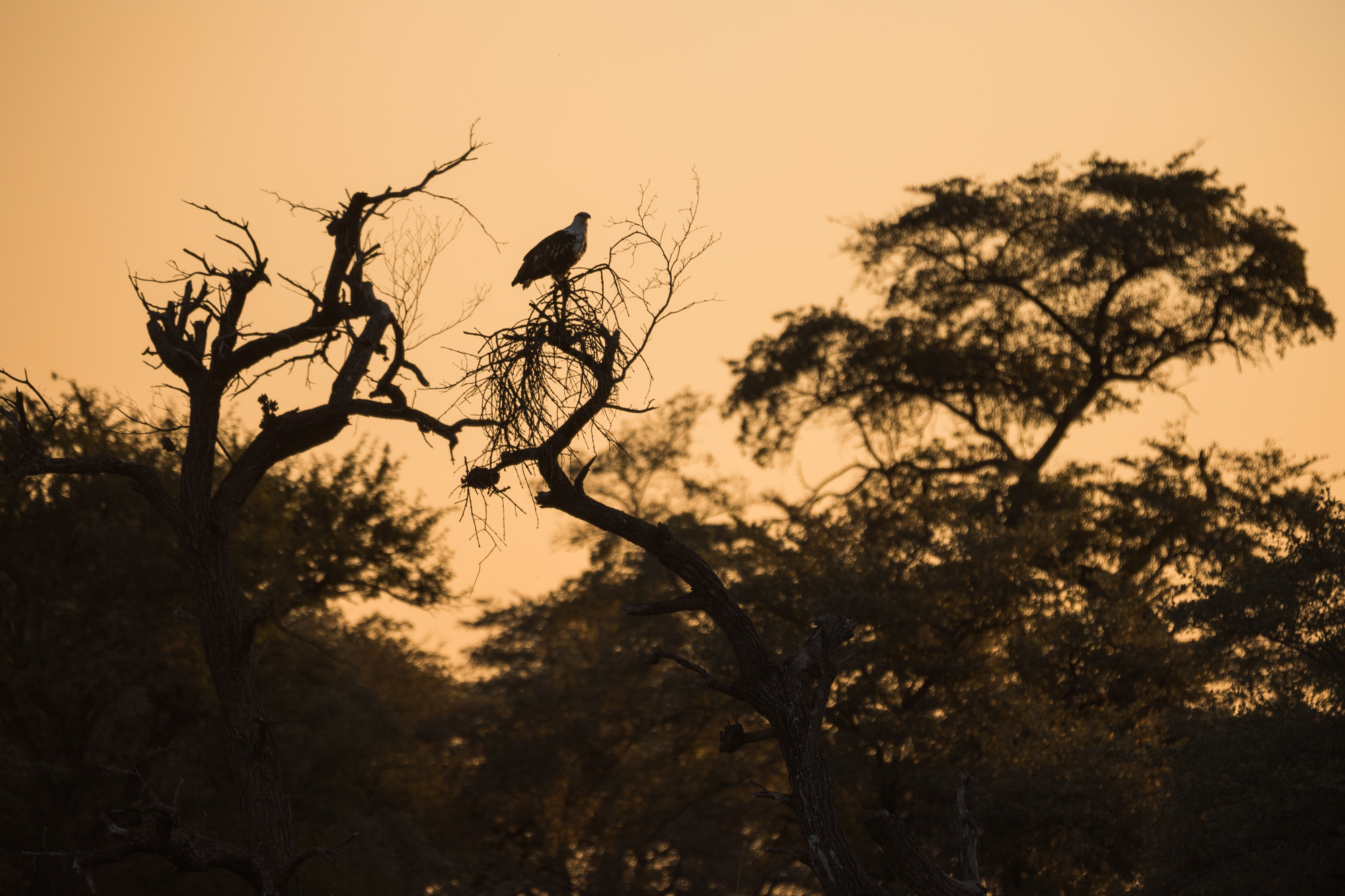 Nambia 2018-0312.jpg