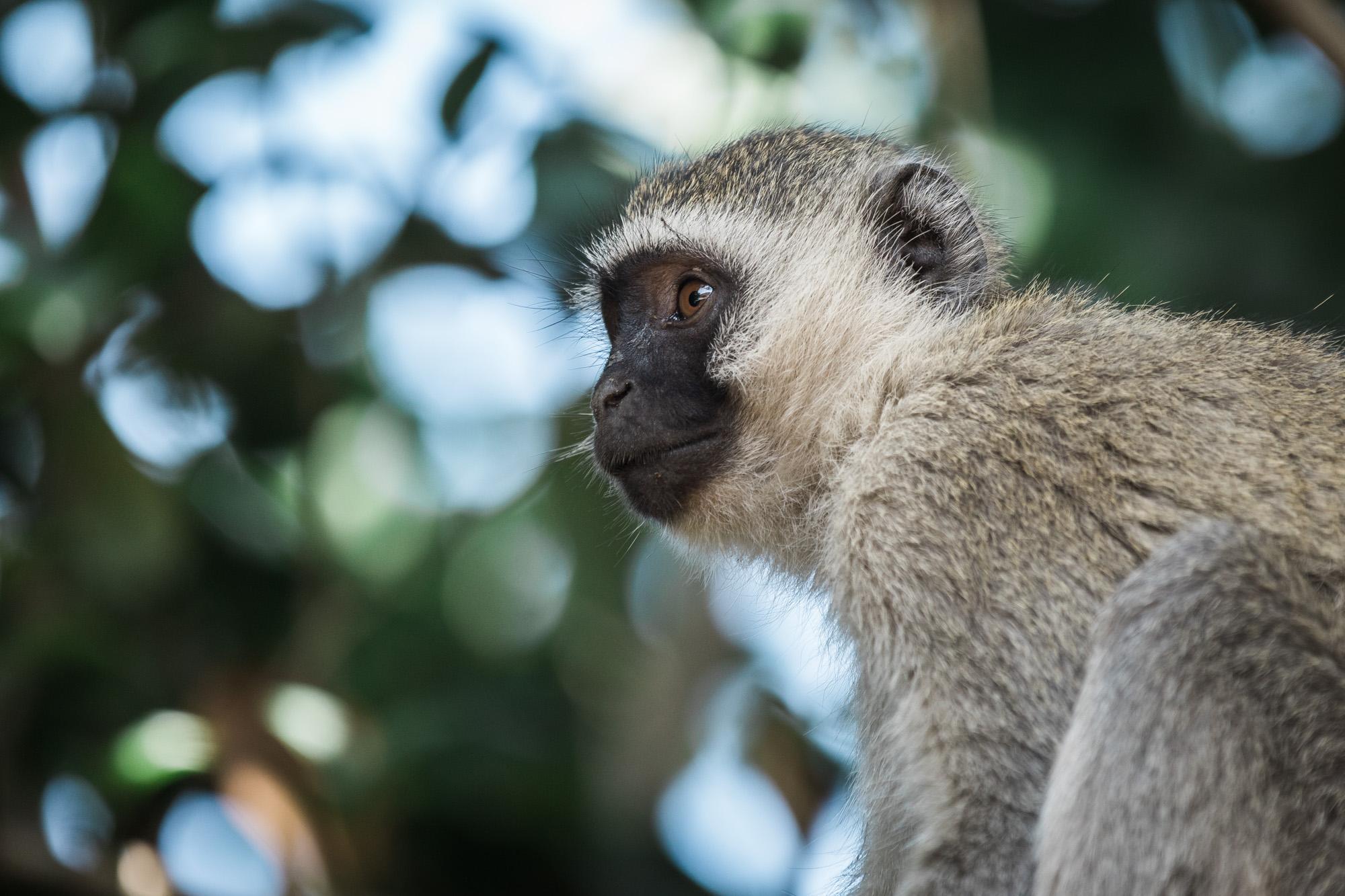 Backyard_Monkeys-48.jpg