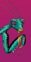 mantis2-2.jpg