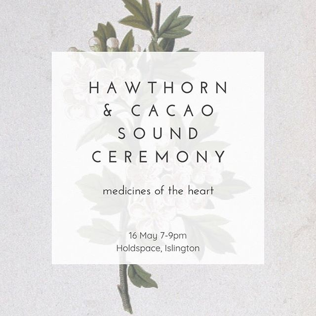 Hellloooo my loves, the next Plant & Sound Ceremony is approaching (yay) and for May we will be working with the heart medicines of Hawthorn (the May Tree) and Cacao.❤️🌿❤️ Hawthorn has been used throughout the ages as a cardio tonic but it is also a very powerful 'energy medicine' for the heart. It helps open the heart to giving and receiving love and can hold the heart during times of emotional stress. It promotes self-love and self-acceptance and encourages a truly open hearted state. A member of the Rose family this plant is used energetically for protection of the heart and allows one to access hope, trust, love, and forgiveness. Cacao empowers us to connect more deeply and effortlessly to our own intuition and heart wisdom and allows us to access realms that are often unavailable to us when we are not still and present. ❤️ Always gentle and gracious these medicines work together beautifully to help heal and open our hearts. ❤️ Together we will drink ceremonial grade cacao from the Peruvian Andes infused with Hawthorn. I will lead you on a short meditation before you set off on a sound journey with the gong and other instruments as your guide. There is nothing for you to do but surrender and receive. ❤️🌿❤️ more info and booking in bio... #hawthorn #gongbath #plantmedicine #cacaoceremony #soundbath #cacao #soundhealing