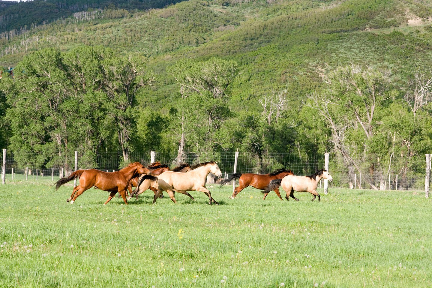 From weanlings to finished horses, the Kurtz Ranch has a great selection of ranch, trail, rope, and show horses for sale.