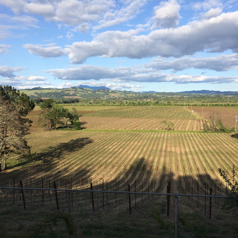 thompson31fifty-vineyard.JPG