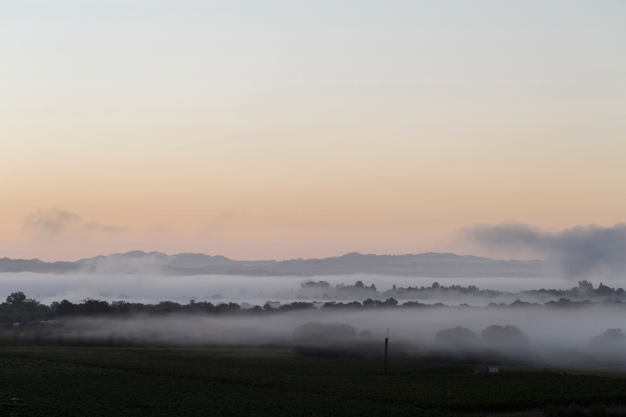 This rolling fog is what makes RRV wine so special.