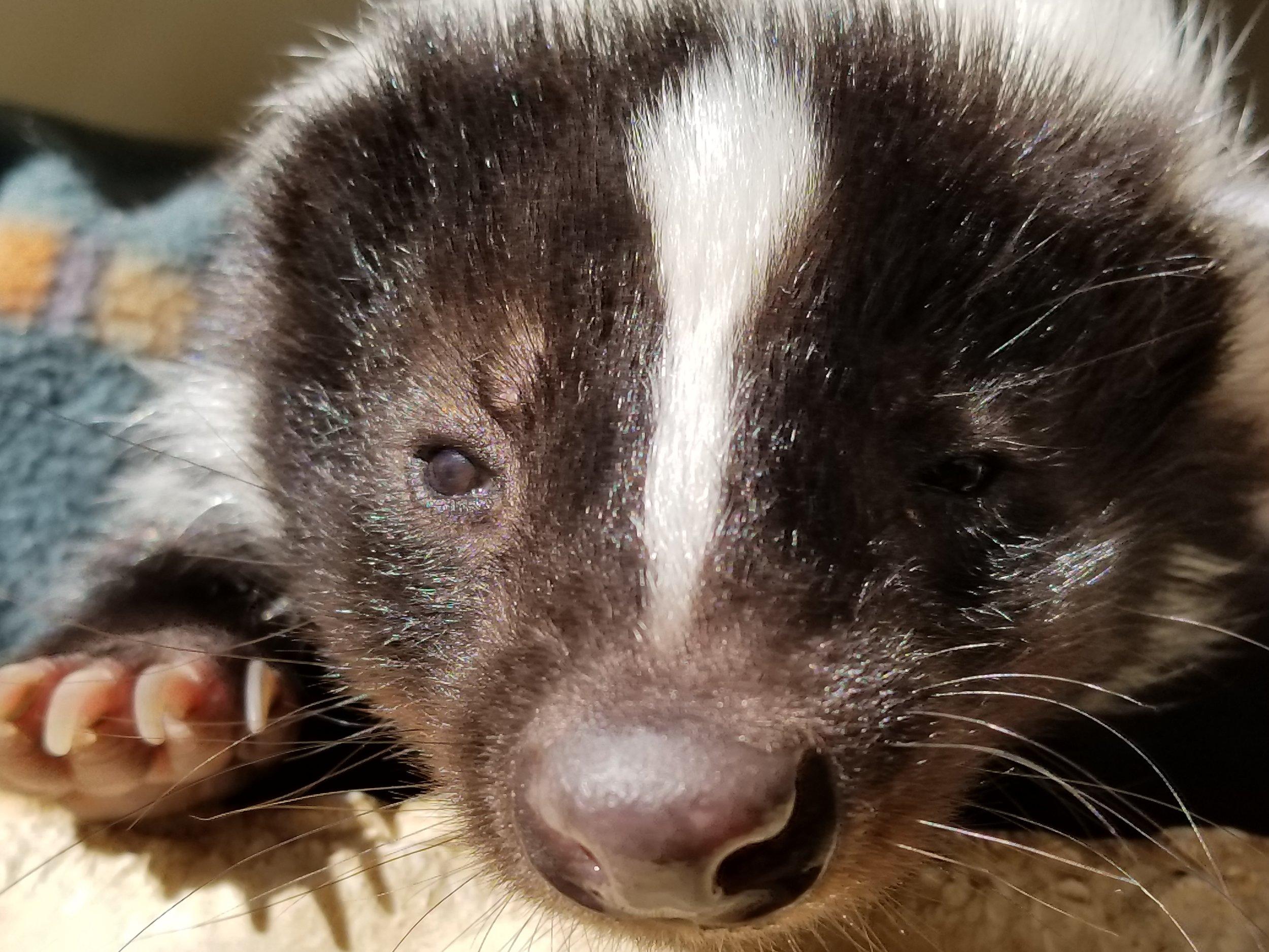 skunk little bear 1.jpg