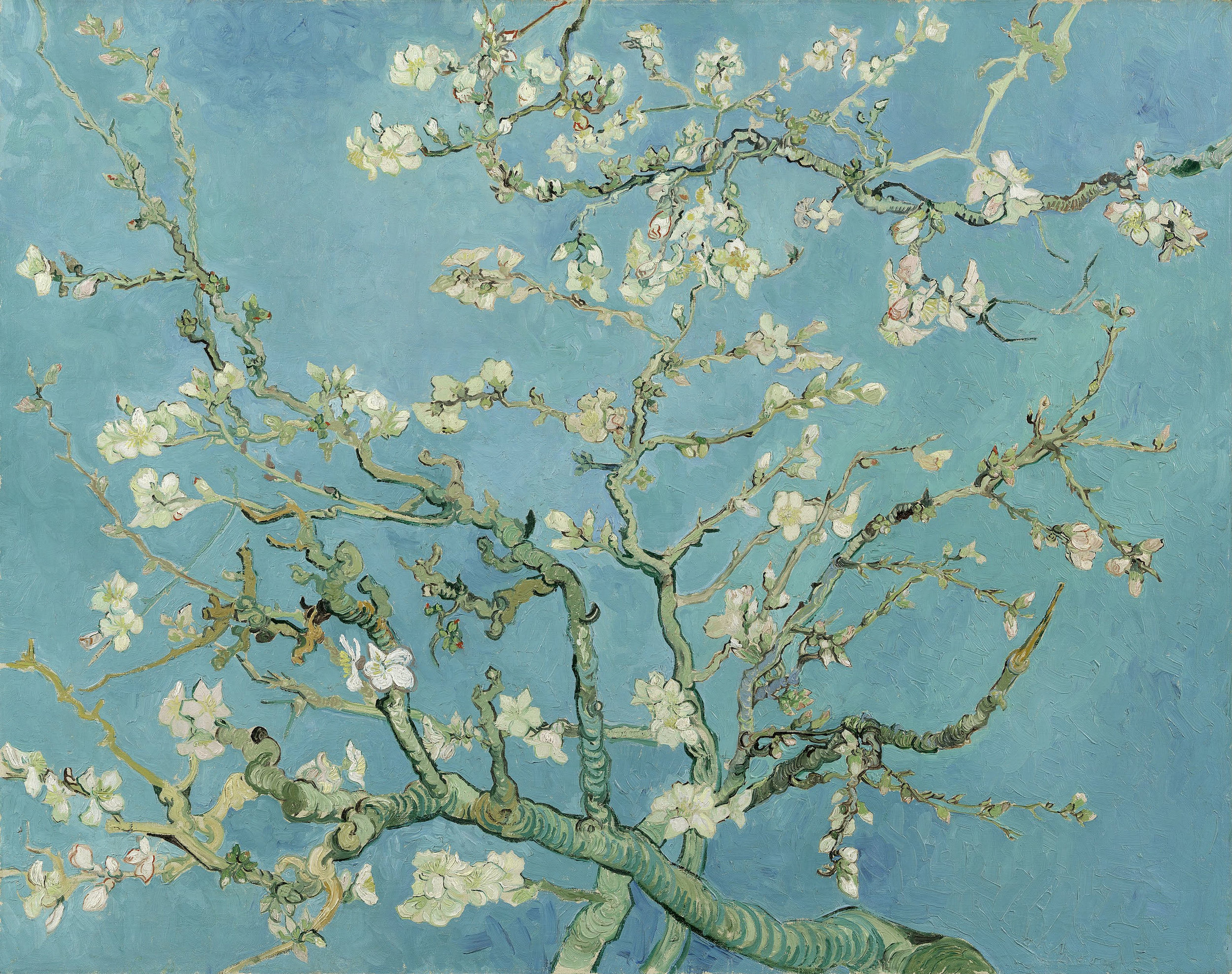 Almond Blossom , Vincent Van Gogh, oil on canvas, 1890