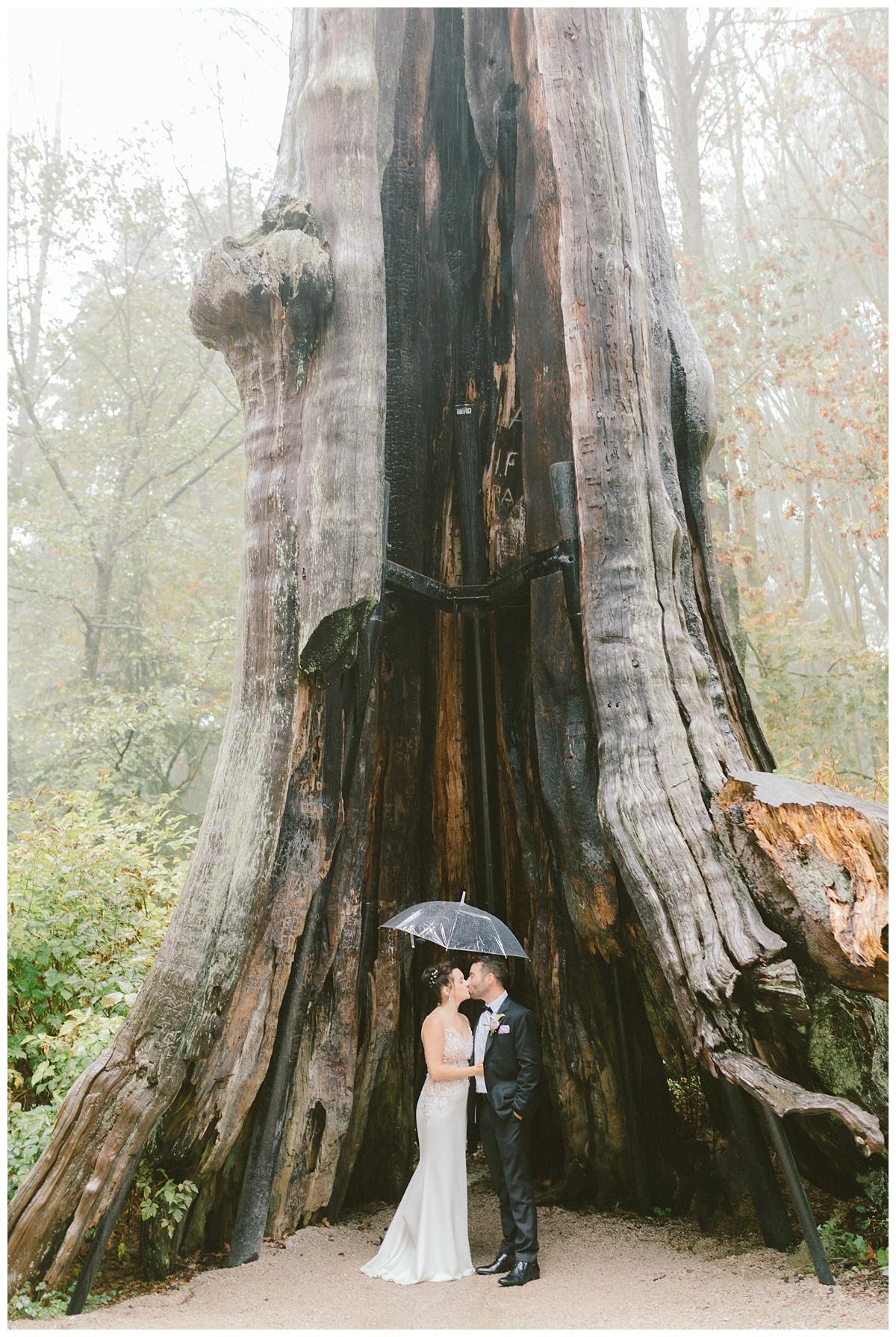 Fall Wedding prewedding photos downtown Vancouver BC (Stanley Park)