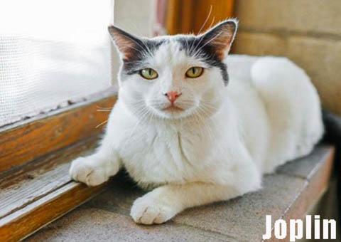 Cat-Joplin
