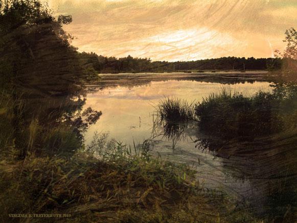 A Bog Pond
