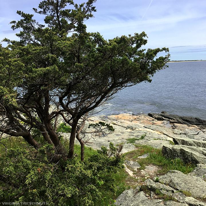 Virginia Freyermuth_Coastal Walk