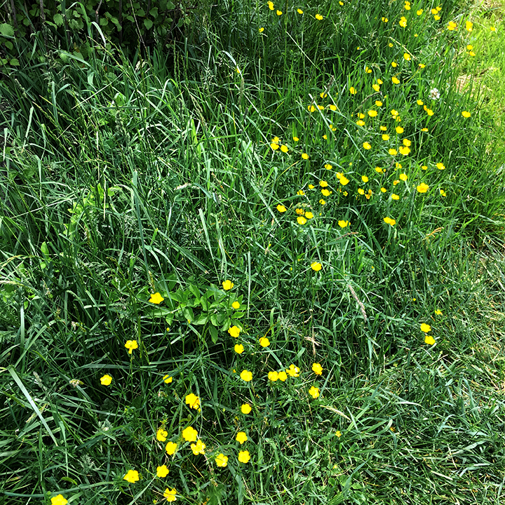 Virginia Freyermuth_flowers along the path