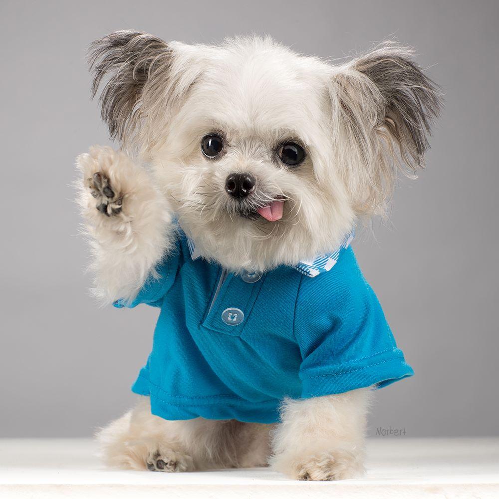 Norbert in a Blue Shirt.jpeg