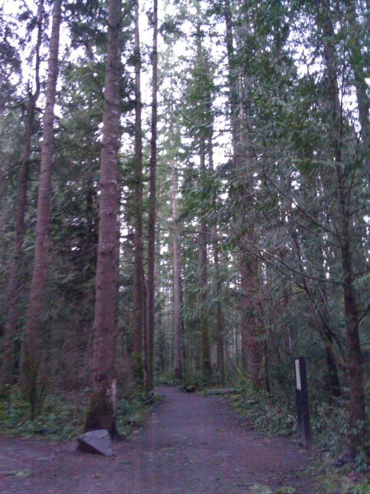 A Little Seattle Trail Running