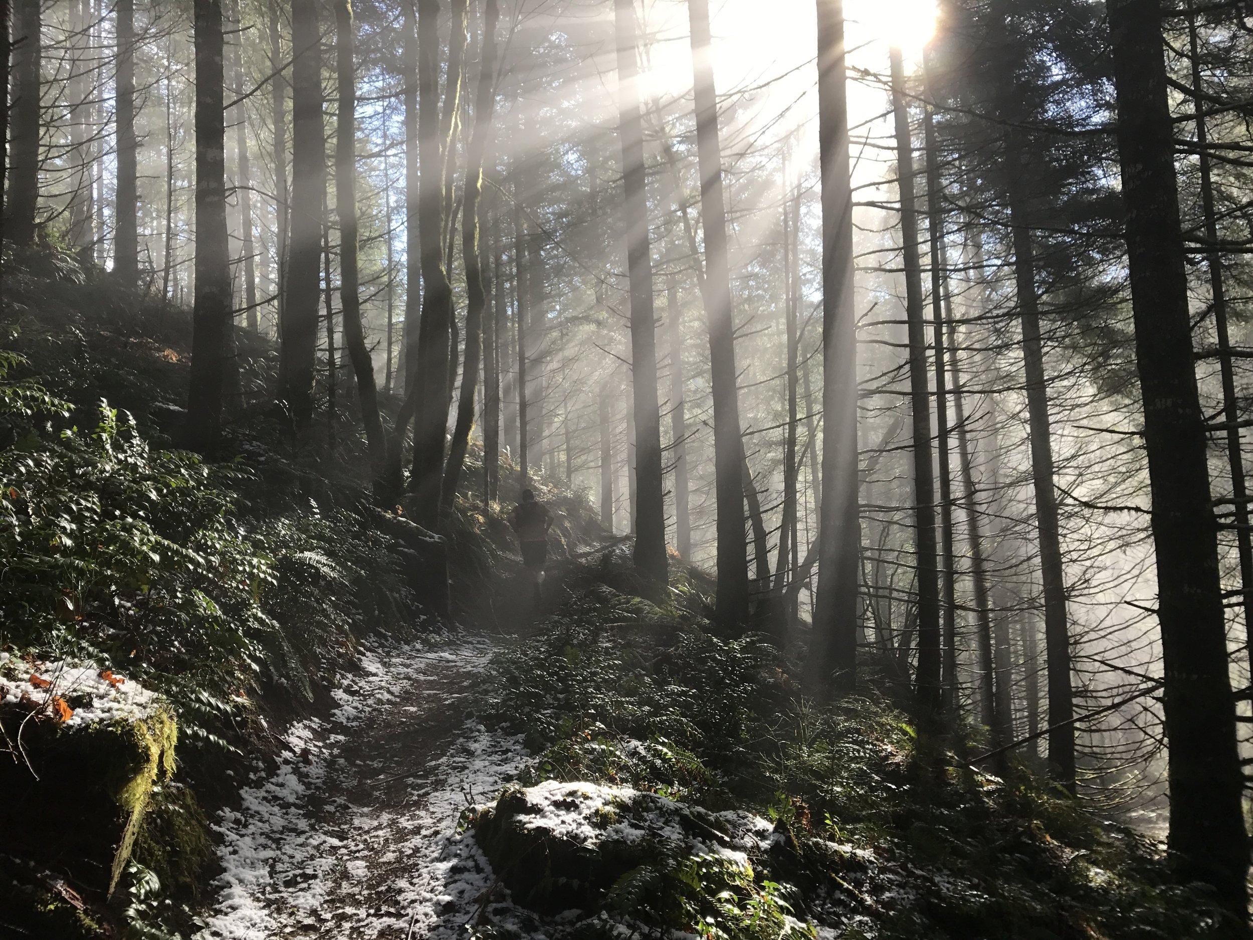Green, sun, snow - Wilson River Trail - Tillamook