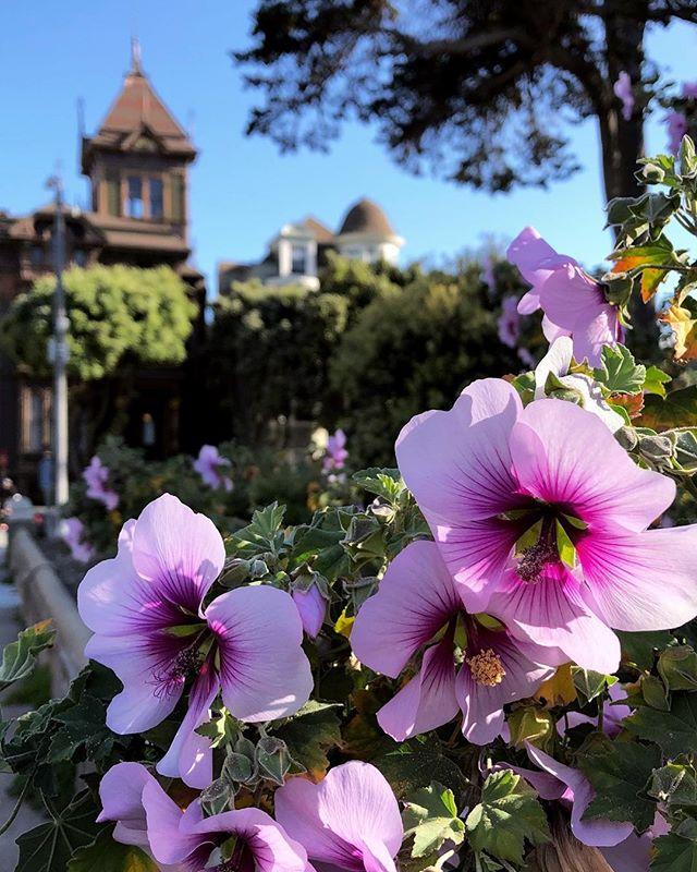 🌁 Spring in San Francisco