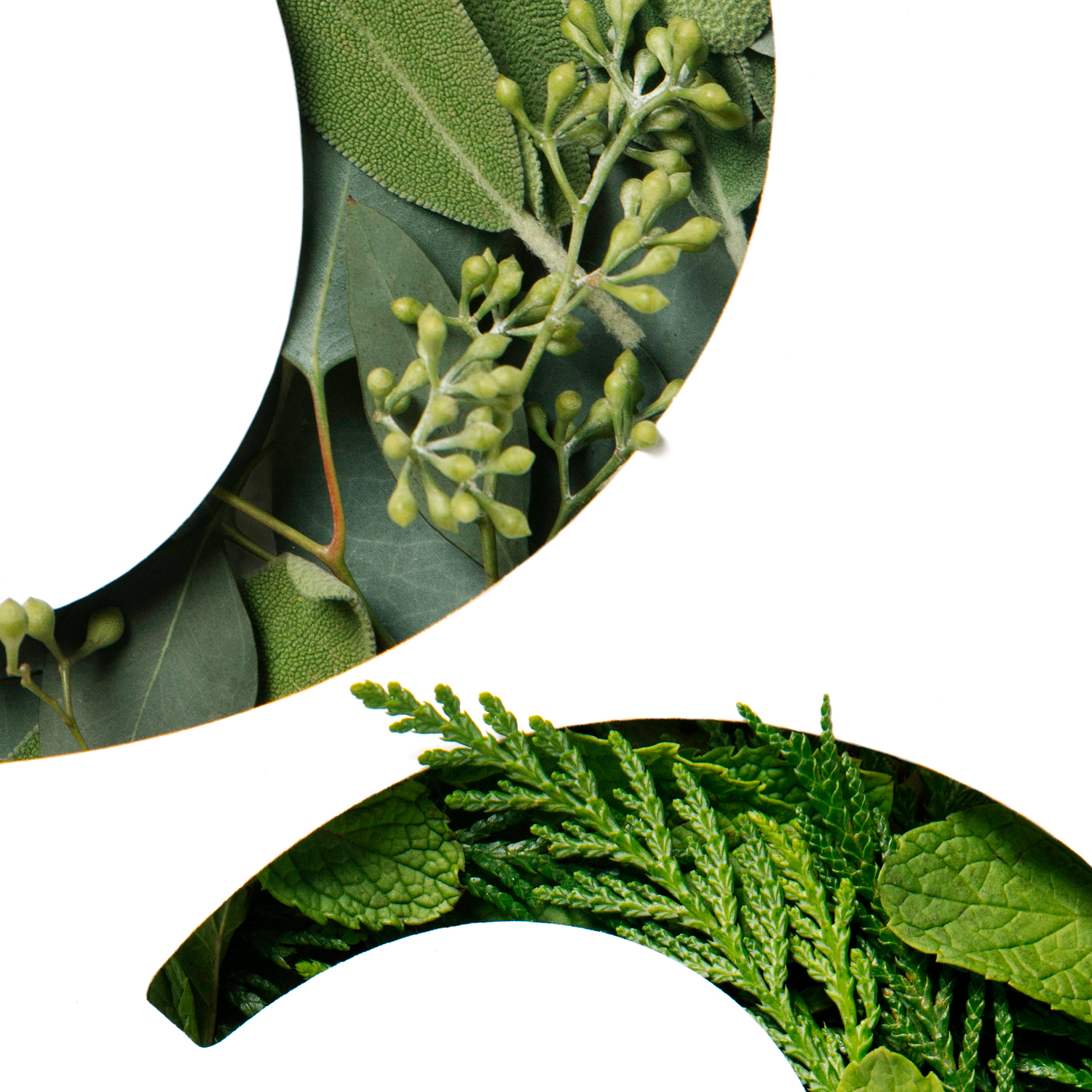 Custom Numbers for Saje Natural Wellness - Using ingredients found in our products, we created beautiful, textural custom numbers to use in our marketing and digital creative.