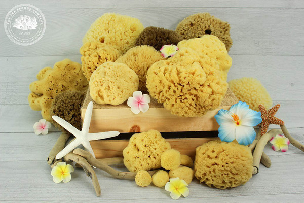 Sea Sponge Tampons