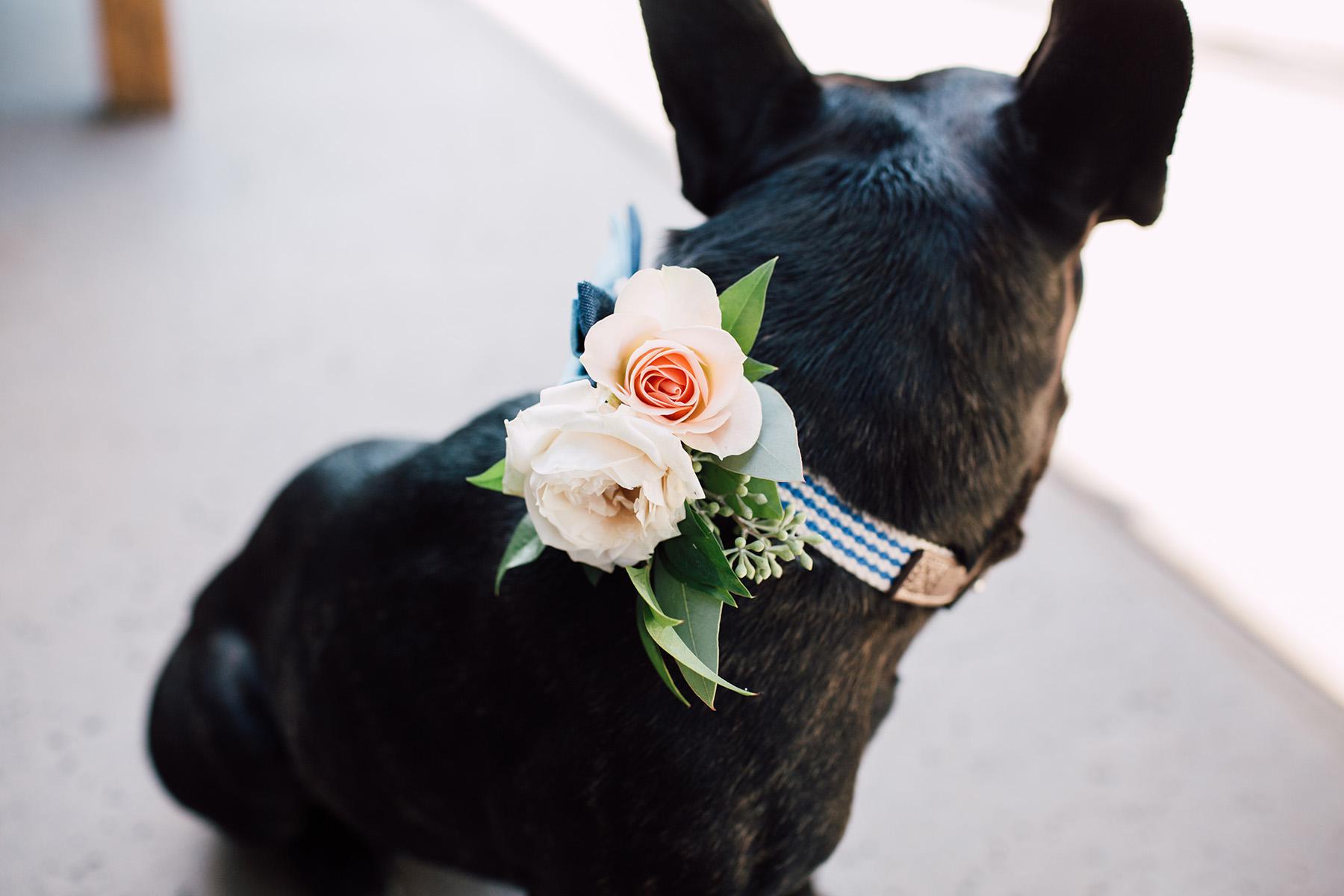 1dogflowercollar_0118.jpg