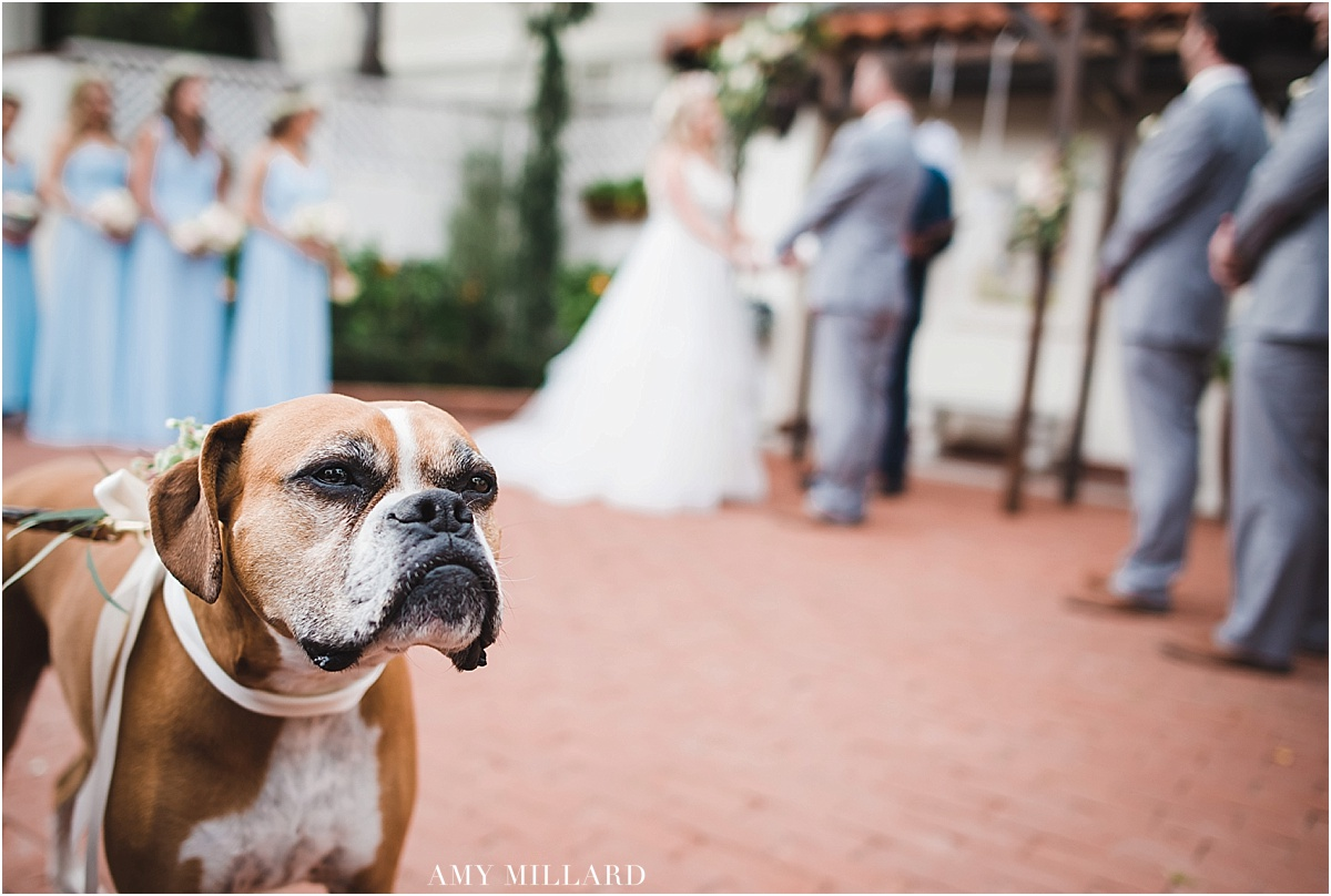 weddingdog.jpg