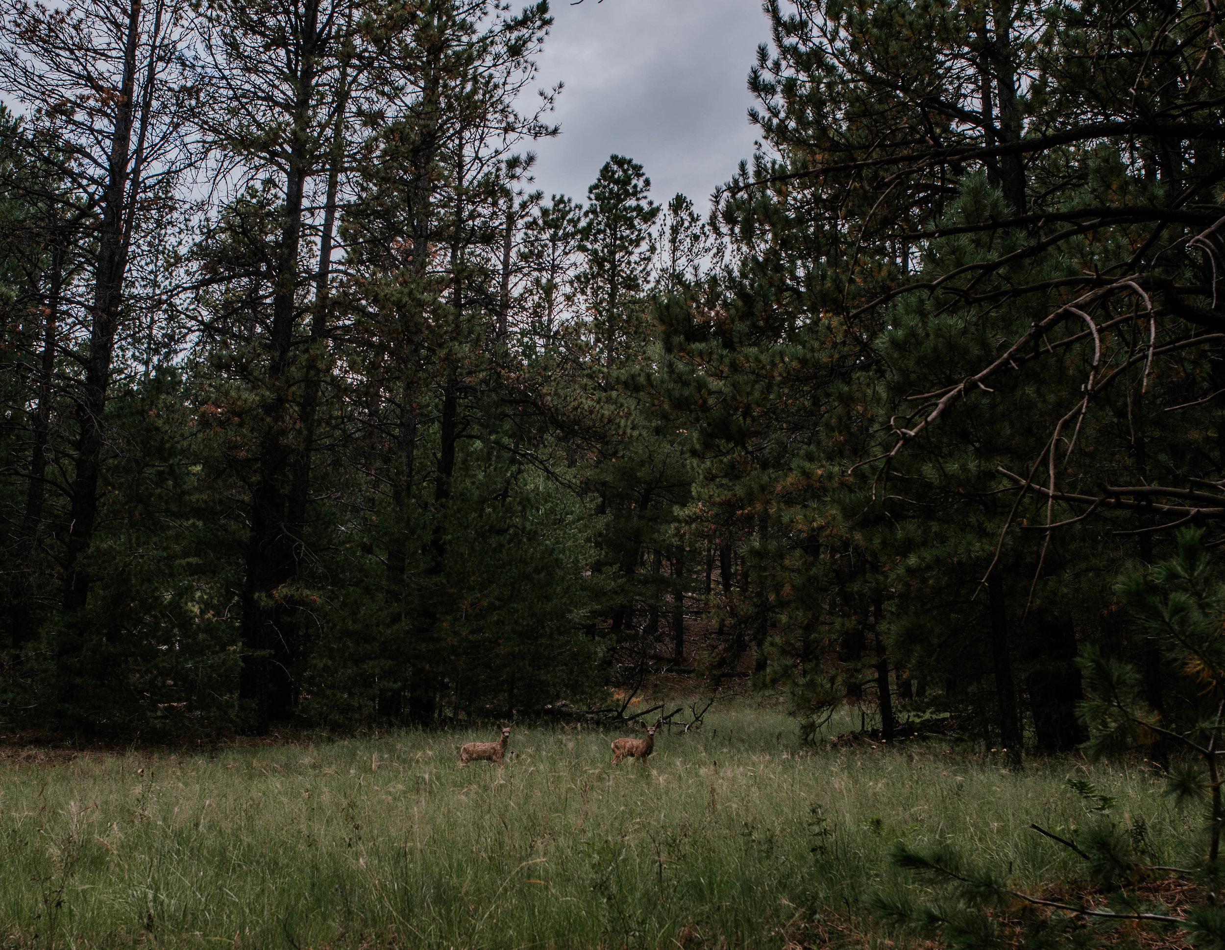 Flagstaff, Arizona Sunset Engagement - Taylor + Curtis-37.jpg