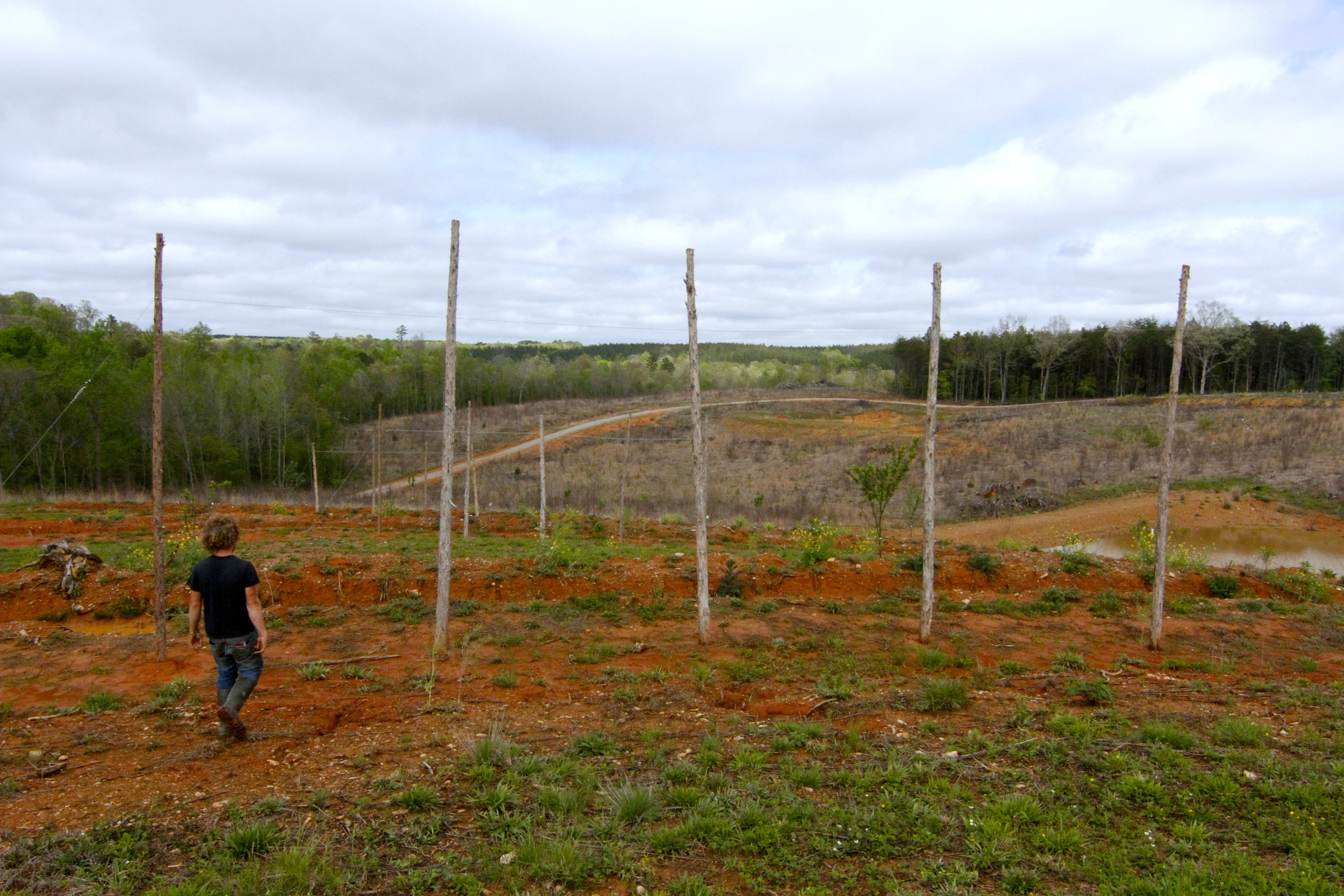 That's Sean (the farm's hired hand) and those are hop trellises. This year will be  Cricket Cove's  second year of biodynamic hops.