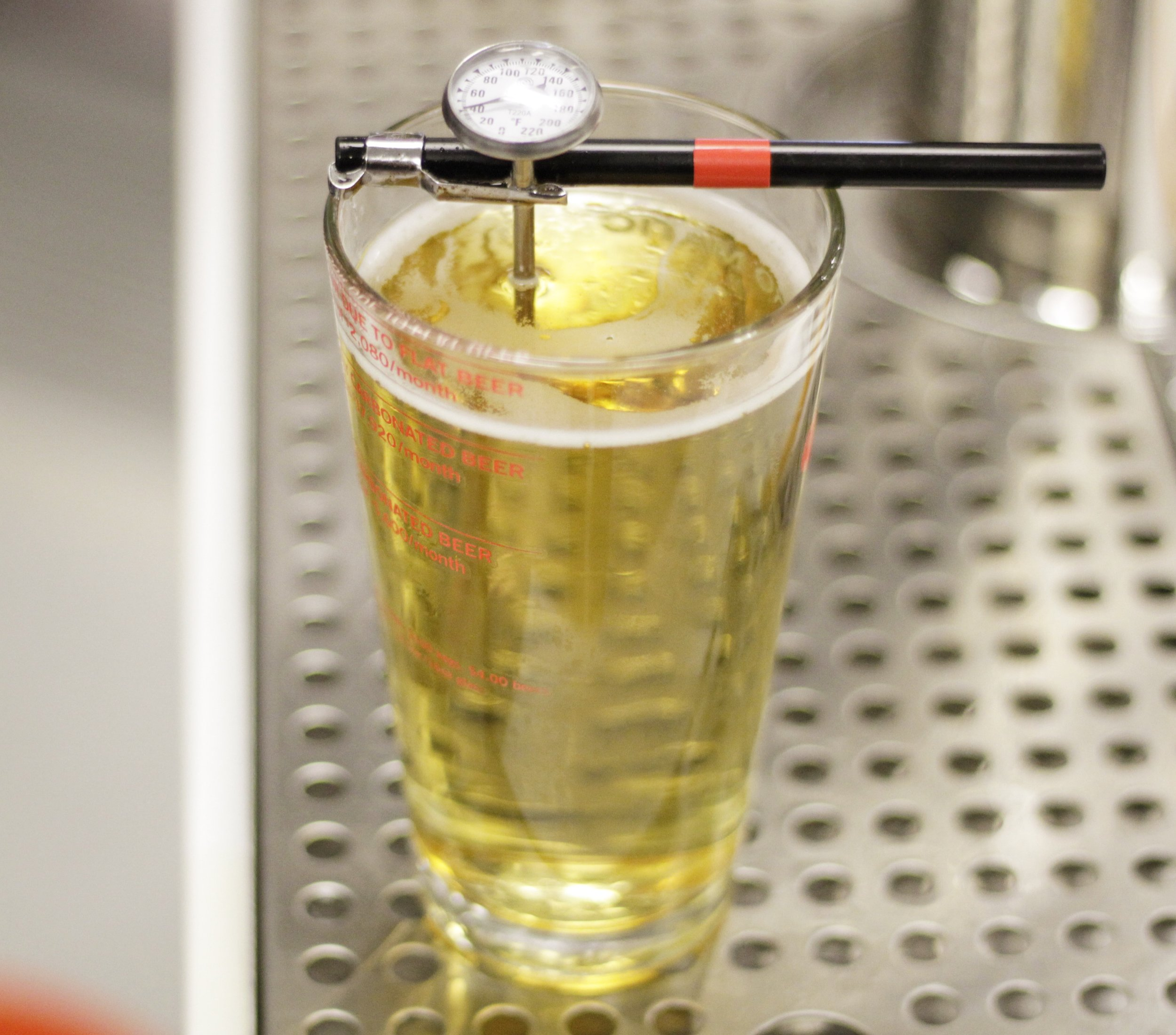 It might look like pee, but a glass of yellow fizz is the perfect guinea pig practicing temperature readings .
