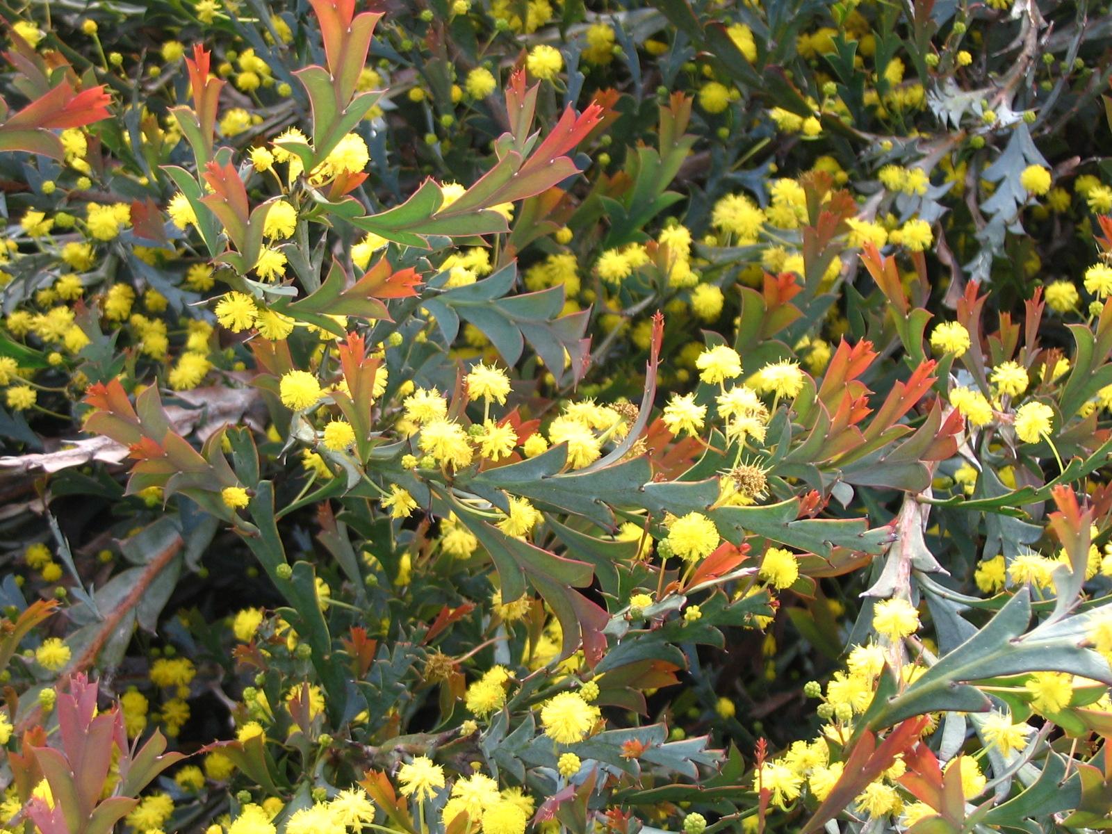 5 Golden flowers on stalks.JPG